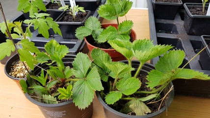 Plants 2 on table, plant sale May 2017