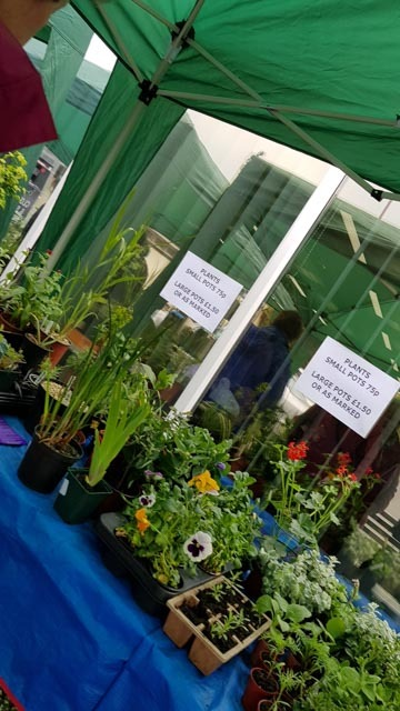 Plants 4 on table, plant sale May 2017