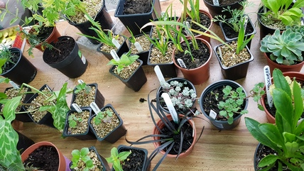 Plants on table, plant sale May 2017
